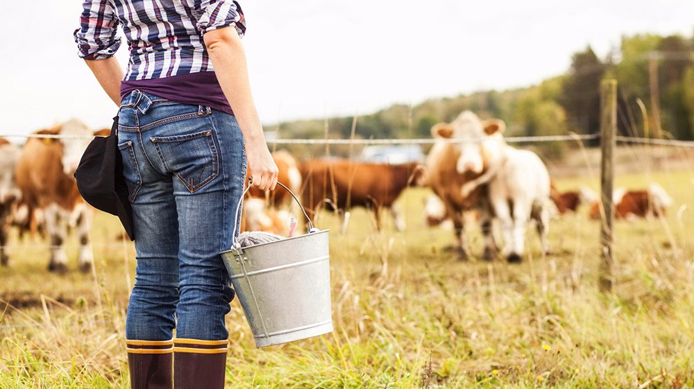 Female farmer with bucket standing at field with animals grazing in background